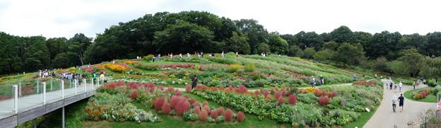 200919-里山ガーデン 大花壇 (61)