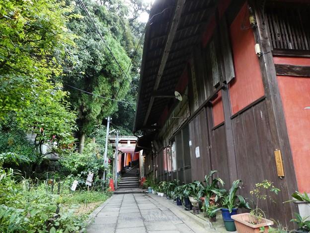201018-伏見稲荷 (78)