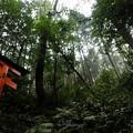 Photos: 201018-伏見稲荷 (154)