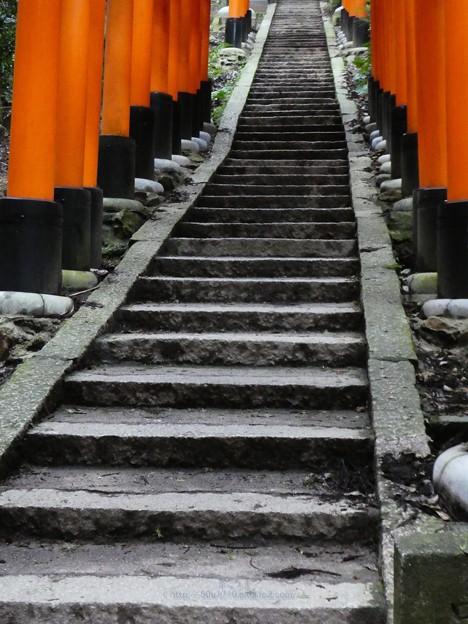 201018-伏見稲荷 (157)