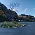 Photos: P_20201119_里山ガーデン (1)