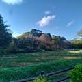 Photos: P_20201119_里山ガーデン (3)