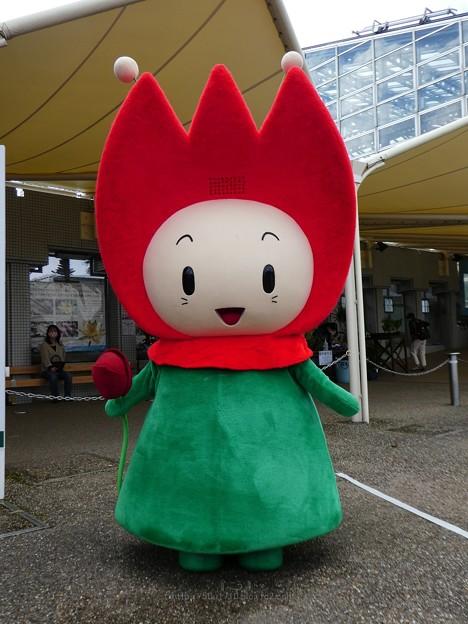 201122-花ずきんちゃんグリーティング (3)