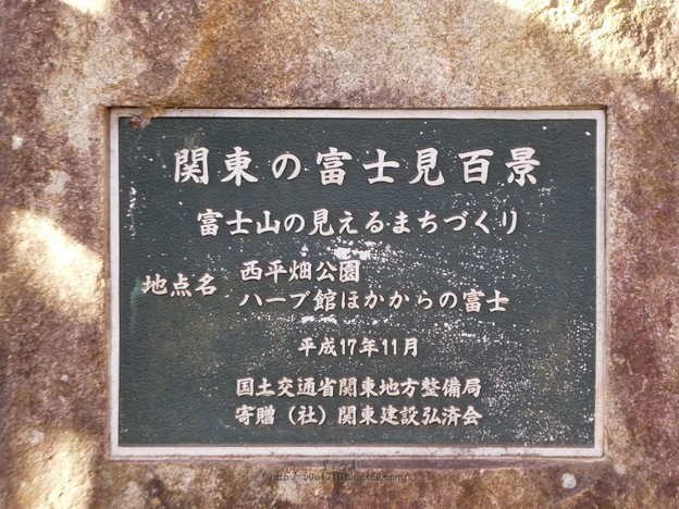 210220-河津桜@西平畑公園 (49)