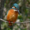 野鳥を写すサークル!!