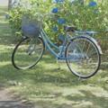 自転車とあじさい