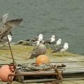 Photos: 川の桟橋にて