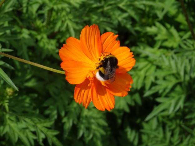 Photos: ミツバチのささやき