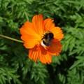 ミツバチのささやき