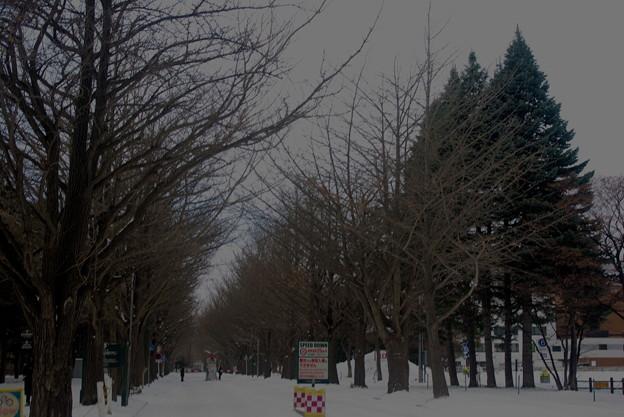 Photos: Iもうすぐ冬がやってきます