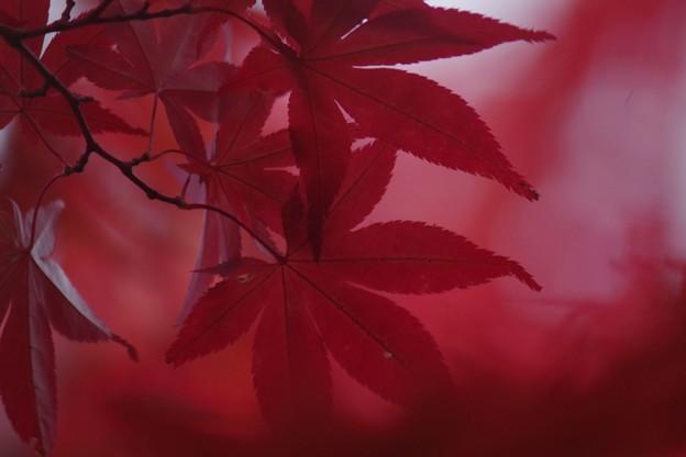 赤いゼリー