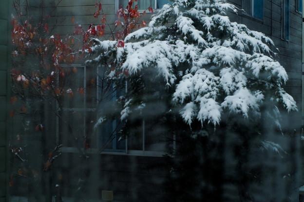 Photos: 雪でした