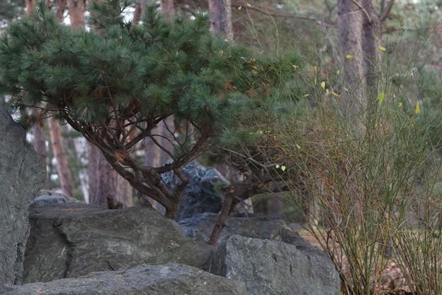 ガッツ石松