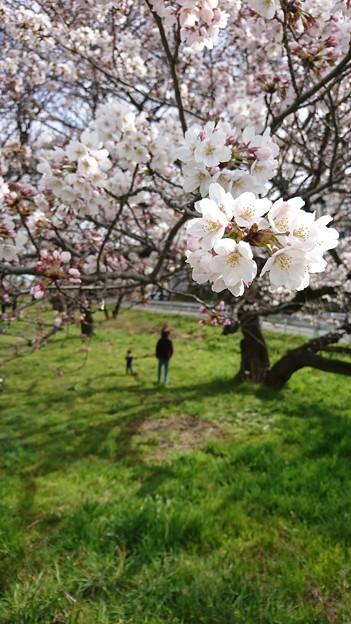 Photos: 春の休日