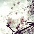 Photos: 桜2018-03-24