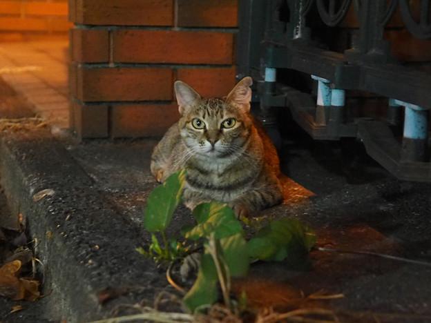Photos: 夜の猫