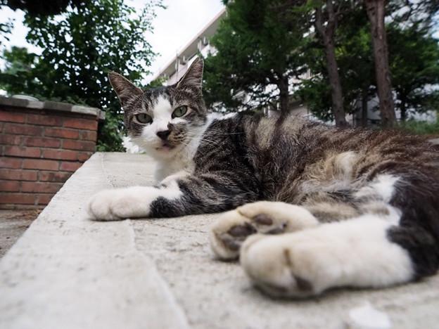 Photos: ママ猫さん。