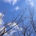 【14194号】冬の空 平成301212 /1