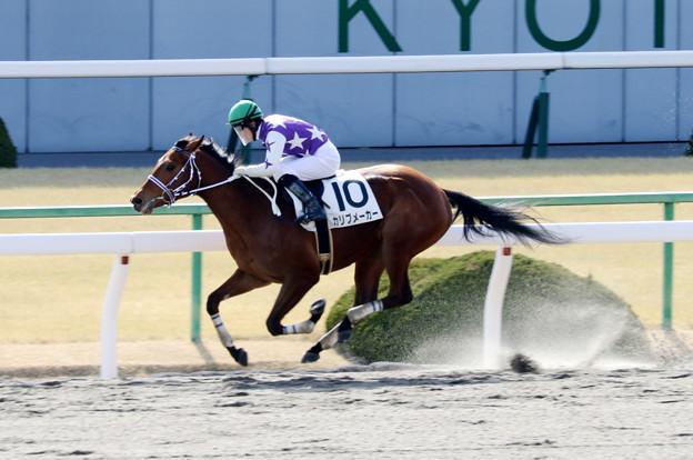 カリブメーカー(2018/02/04 京都3R 3歳新馬)