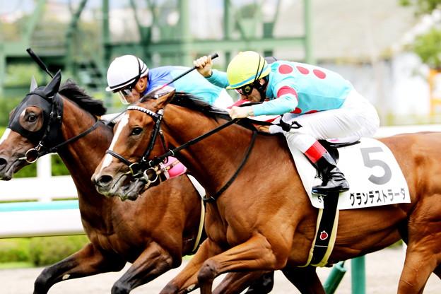 グランデストラーダ(阪神5R 2歳新馬)