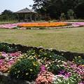 写真: 新緑 花