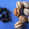 Photos: 栴檀(右)と白檀の種子