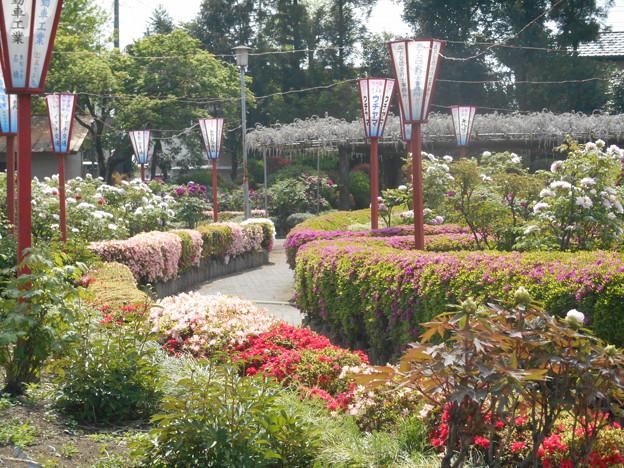 箭弓神社牡丹園