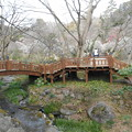 Photos: 熱海梅園 橋