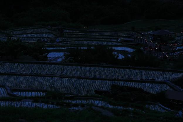 四谷千枚田灯火