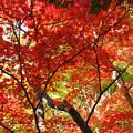 写真: もみじ谷-DSC_4734