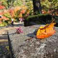 写真: もみじ谷-DSC_4763