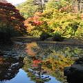 Photos: もみじ谷-DSC_4783