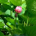 Photos: Lotus