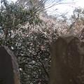 写真: 富士見櫓跡2
