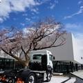 4月11日オープン いすゞプラザ前の桜