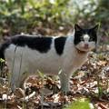 写真: ペロリ猫