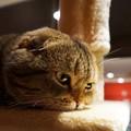 考え込む猫