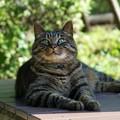 写真: 上が気になる猫