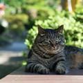 写真: 日陰でくつろぐ猫