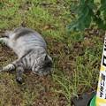 作業中らしい猫