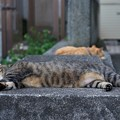 寝る猫たち2
