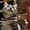ローアングルから猫