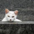 くつろいでいるのか警戒しているのか分からない猫