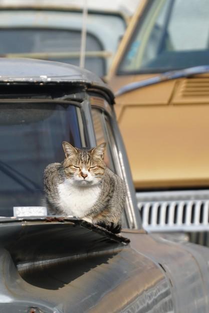 ムスッとしてる猫