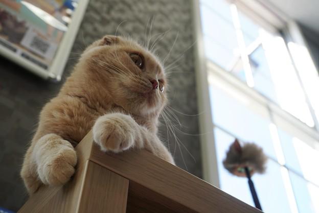 写真: ローアングルから猫