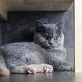 写真: 隅っこの猫