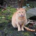 かわいい顔の猫