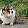 河原の三毛猫