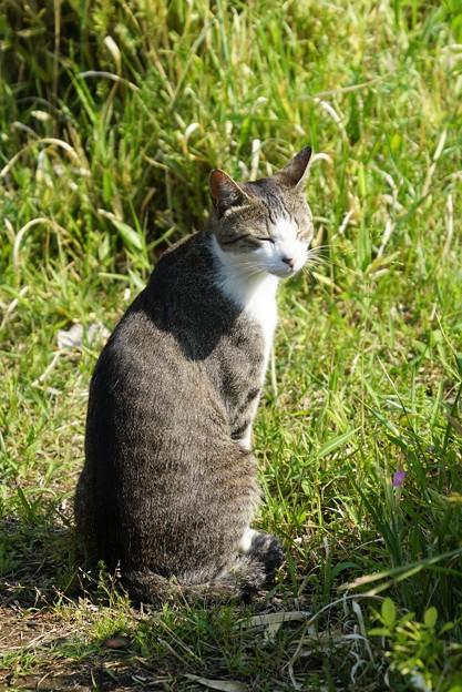 写真: 小顔猫2