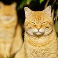 写真: 残像猫